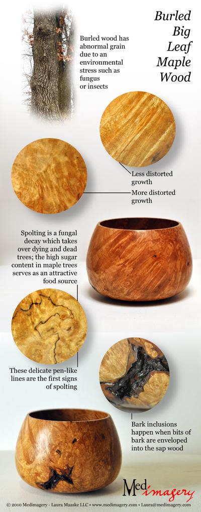 Wood Structure: Bigleaf Maple