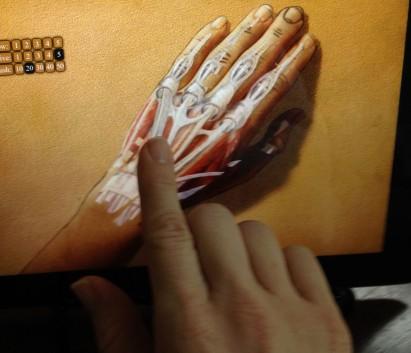 hand-app_anatomy_2