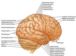 brainlabelsext(400)